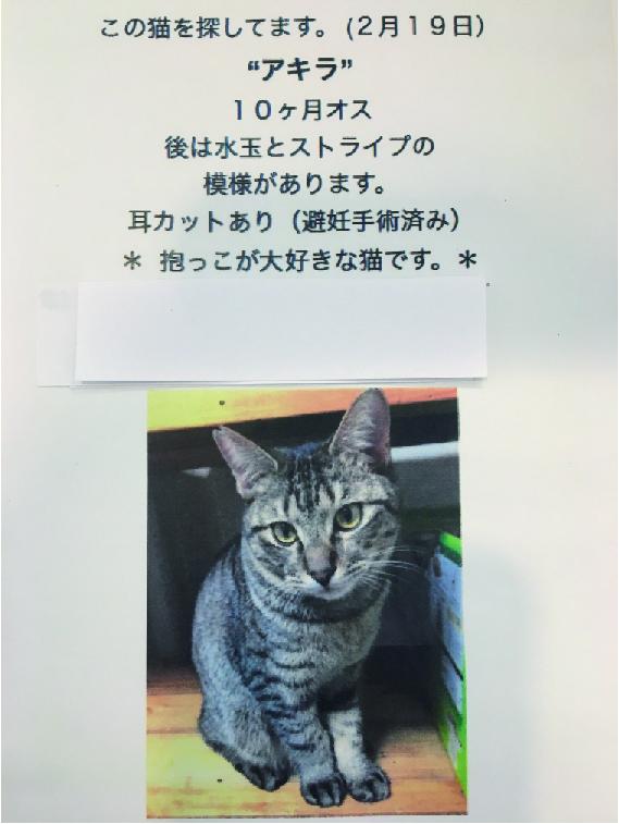 ネコの捜索願